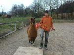 In einer tiergestützten Therapie ist die Arbeit mit Patienten und Tieren wichtig (Bildquelle: BED e.V.)