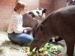Für die Ausbildung wichtig: keine Angst vor Tieren (Quelle: Zoo Krefeld)
